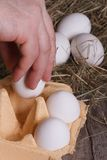 Hand man puts all his eggs in a tray. Closeup Stock Photo