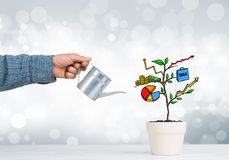 Drawn income tree in white pot for business investment savings and making money Royalty Free Stock Photos