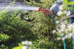 Hand man watering the  garden Stock Photo