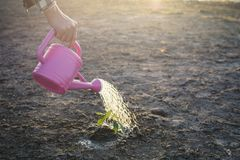 Hand of a man watering little green plant on cracked dry ground Royalty Free Stock Images