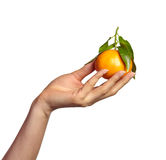 Hand with Mandarin Orange Royalty Free Stock Photo