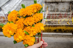 Hand with marigold incense stick and candles for worship Buddha Royalty Free Stock Photos