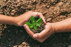 Hand of mater and child protection small tree. concept planting. Save world Stock Images