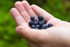 Hand med blåbäret royaltyfri bild