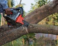 Hand med chainsawen som klipper trädet Arkivbild