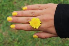 Hand med den gula blomman royaltyfria foton