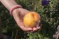 Hand med den nya saftiga persikan under ström av vatten arkivbild