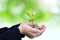 Hand med en tree som växer från stapel Arkivbilder
