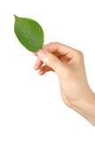 Hand med grön leaf  Fotografering för Bildbyråer