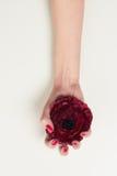 Hand med röd manikyr och den röda blomman Arkivbilder