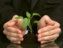 Hand men, holding a plant Stock Image