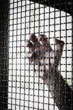 Hand and mesh cage for freedom Stock Image