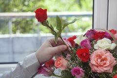 Hand met bloem Stock Foto's