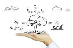 Hand met boomdaling het globale verwarmen, fotosynthese Stock Fotografie