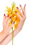 Hand met gele orchidee Royalty-vrije Stock Afbeelding