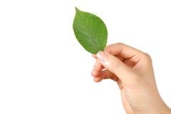 Hand met groene leaf  Stock Foto