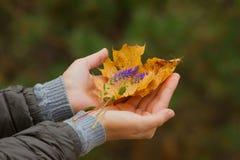 Hand met kleurrijk boeket van de herfstbladeren Royalty-vrije Stock Foto's