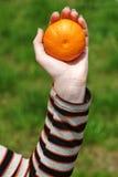 Hand met mandarijntje Stock Foto