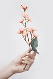 Hand met sakura Royalty-vrije Stock Fotografie
