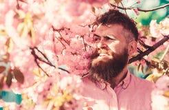 hand met stenen Hipster in roze overhemd dichtbij takken van sakuraboom Mens met baard en snor op het glimlachen gezicht dichtbij stock foto's