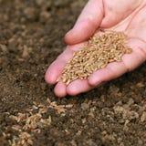Hand met zaden stock foto