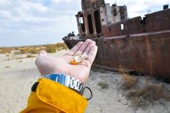Hand met zeeschelpen op een achtergrond van schip in de woestijn Stock Foto