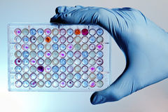 Hand with a microplate Royalty Free Stock Photo