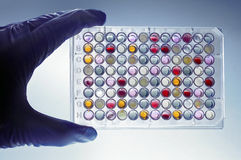 A hand with a microplate Stock Images