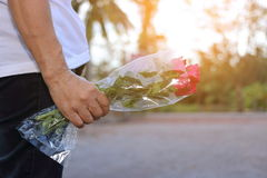 Hand of middle aged woman is holding a beautiful bouquet of red roses on blurred background with sunshine effect. Lover and dating Stock Image