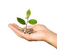 Hand mit Baum Lizenzfreie Stockfotos