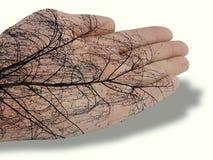 Hand mit Baumzeichnung Lizenzfreie Stockfotos