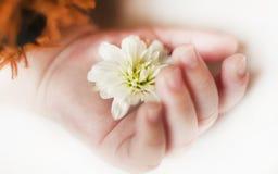 Hand mit Blume eines neugeborenen Babyabschlusses Schlafens herauf lokalisierten Hintergrund lizenzfreies stockbild
