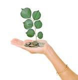 Hand mit dem Baum, der von den Münzen wächst stockbilder