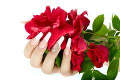 Hand mit der französischen Maniküre, die eine rote Rosenblume hält stockbild