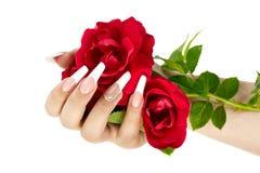 Hand mit der französischen Maniküre, die eine rote Rosenblume hält lizenzfreies stockfoto