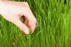 Hand mit einem Reagenzglas und einem Gras. Düngemittel Stockbild