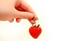 Hand mit Erdbeere Stockbilder