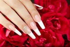 Hand mit französischer Maniküre und roten Rosen Stockbild