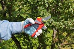 Hand mit Gartenarbeitbaumschere lizenzfreie stockbilder