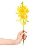 Hand mit gelber Orchidee Lizenzfreies Stockfoto