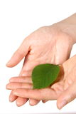 Hand mit grünem leaf  Lizenzfreie Stockfotos