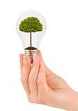 Hand mit Lampe und Baum Stockbilder