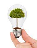 Hand mit Lampe und Baum Stockfotografie