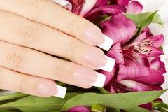 Hand mit langen künstlichen Franzosen manikürte Nägel und Lilienblumen Lizenzfreies Stockbild