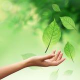 Hand mit Naturelementblättern Stockfotos