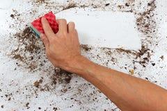 Hand mit Schwamm säubert schmutzige Oberfläche Lizenzfreies Stockbild