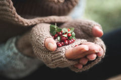 Hand in mittens holds cowberries berries Stock Photos