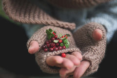 Hand in mittens holds cowberries berries Royalty Free Stock Photo