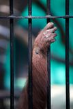 Hand monkey in a cage. Hand planted a monkey in a cage, close-up royalty free stock photos
