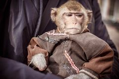 Hand monkey Stock Photo